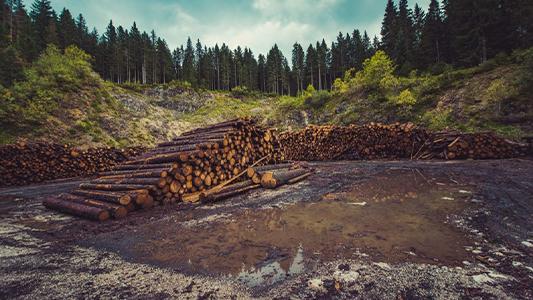 bois arbres déforestation